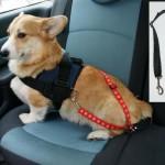 Szelki dla psa w samochodzie to niekoniecznie najlepsze rozwiązanie.