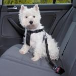 """Pies przypięty szelkami w samochodzie porusza się w trakcie zderzenia """"jak samolot na uwięzi""""."""