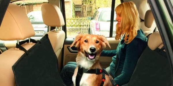 Pies podróżujący w samochodzie – fakty i mity