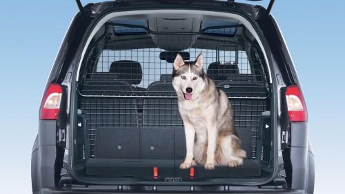 pies w samochodzie krata ok 2 ford galaxy